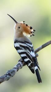 e808cf92890eab63dfe76686d6210a38--colourful-birds-exotic-birds